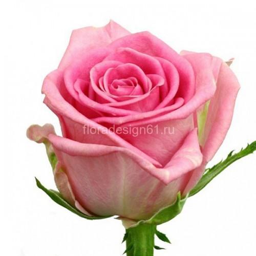 Роза Ревиваль
